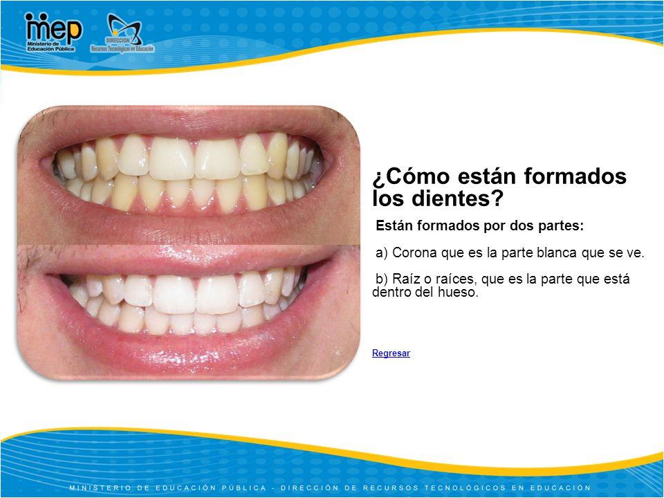 ¿Cómo están formados los dientes.