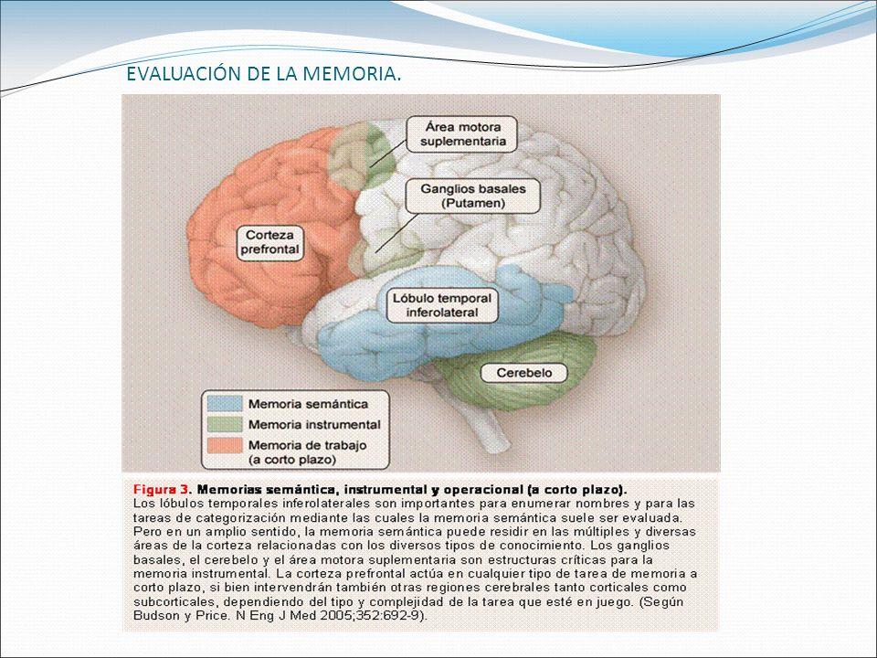 EVALUACIÓN DE LA MEMORIA.
