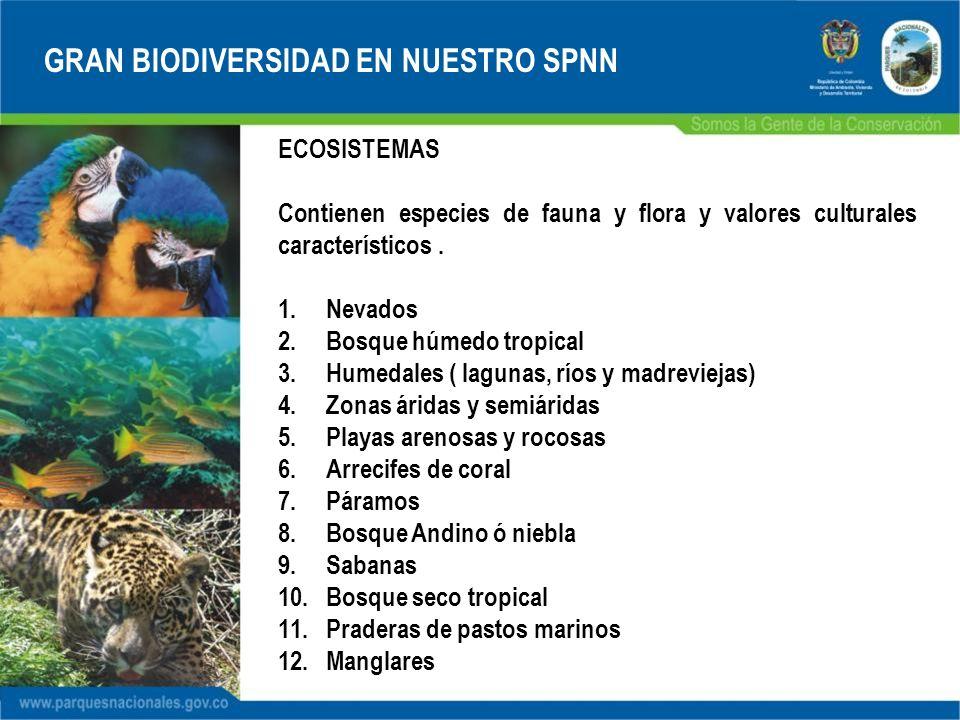 GRAN BIODIVERSIDAD EN NUESTRO SPNN ECOSISTEMAS Contienen especies de fauna y flora y valores culturales característicos. 1.Nevados 2.Bosque húmedo tro