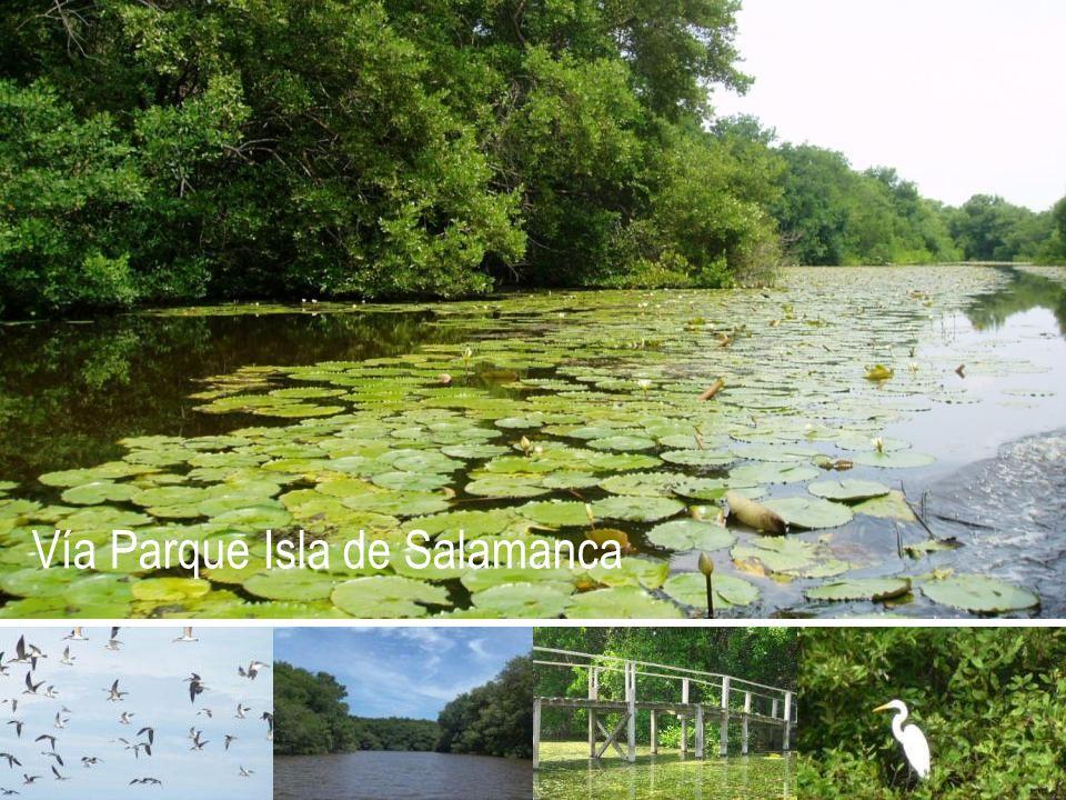 Vía Parque Isla de Salamanca
