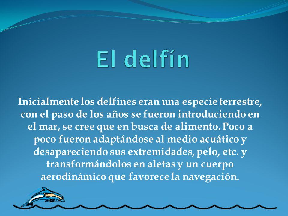 Inicialmente los delfines eran una especie terrestre, con el paso de los años se fueron introduciendo en el mar, se cree que en busca de alimento. Poc