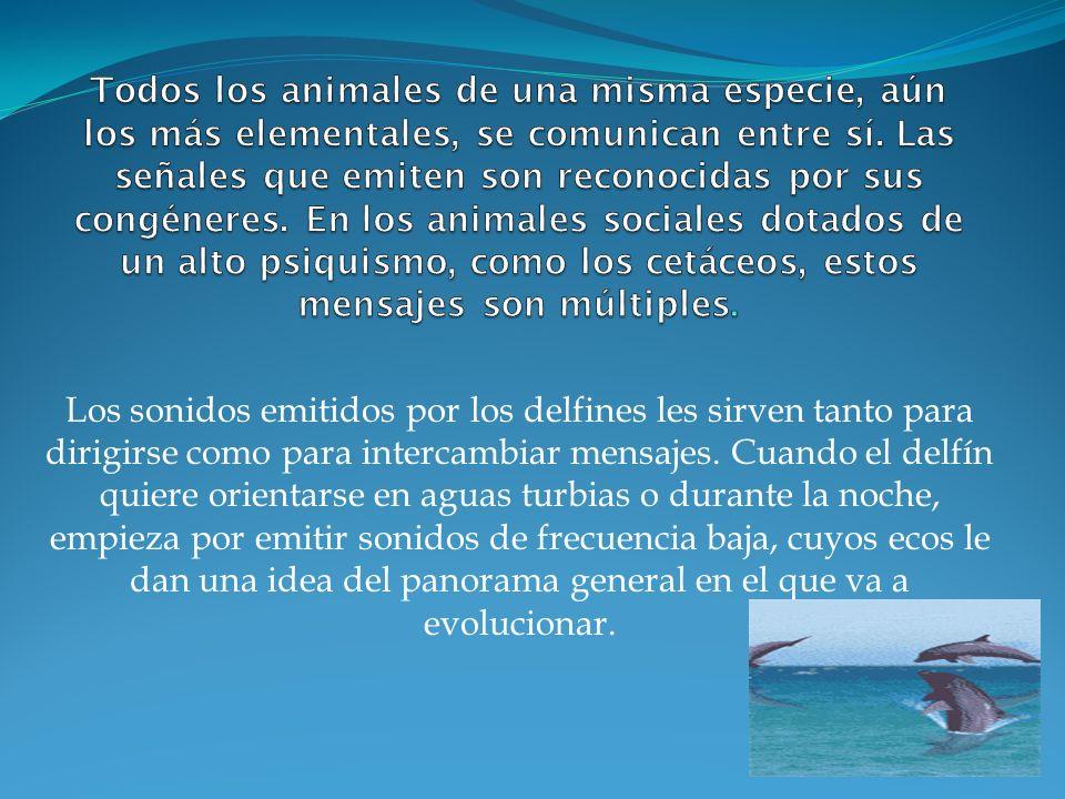 Los sonidos emitidos por los delfines les sirven tanto para dirigirse como para intercambiar mensajes. Cuando el delfín quiere orientarse en aguas tur