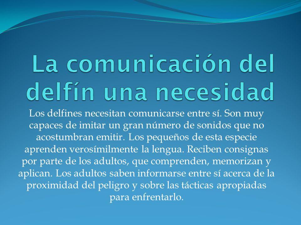 Los delfines necesitan comunicarse entre sí. Son muy capaces de imitar un gran número de sonidos que no acostumbran emitir. Los pequeños de esta espec