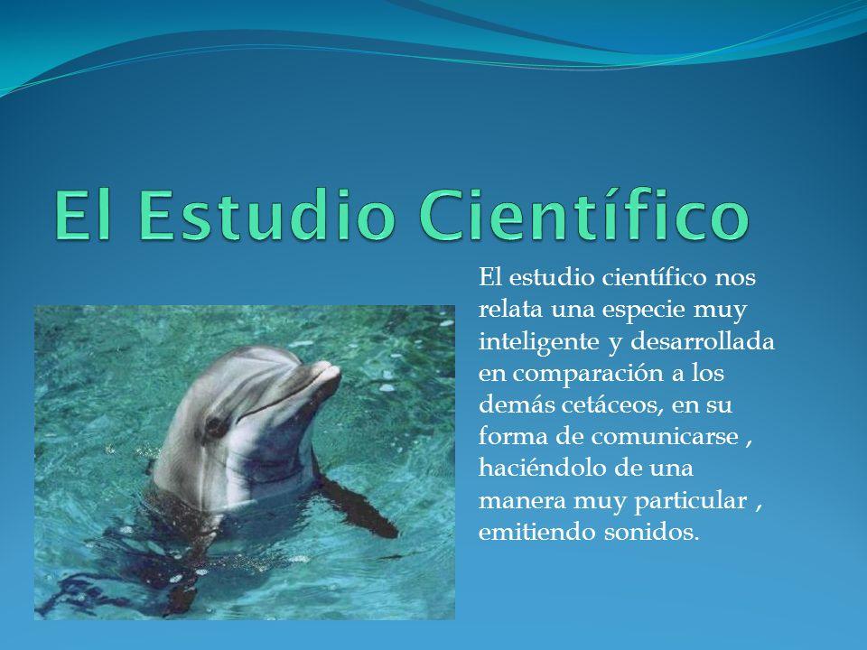 El estudio científico nos relata una especie muy inteligente y desarrollada en comparación a los demás cetáceos, en su forma de comunicarse, haciéndol