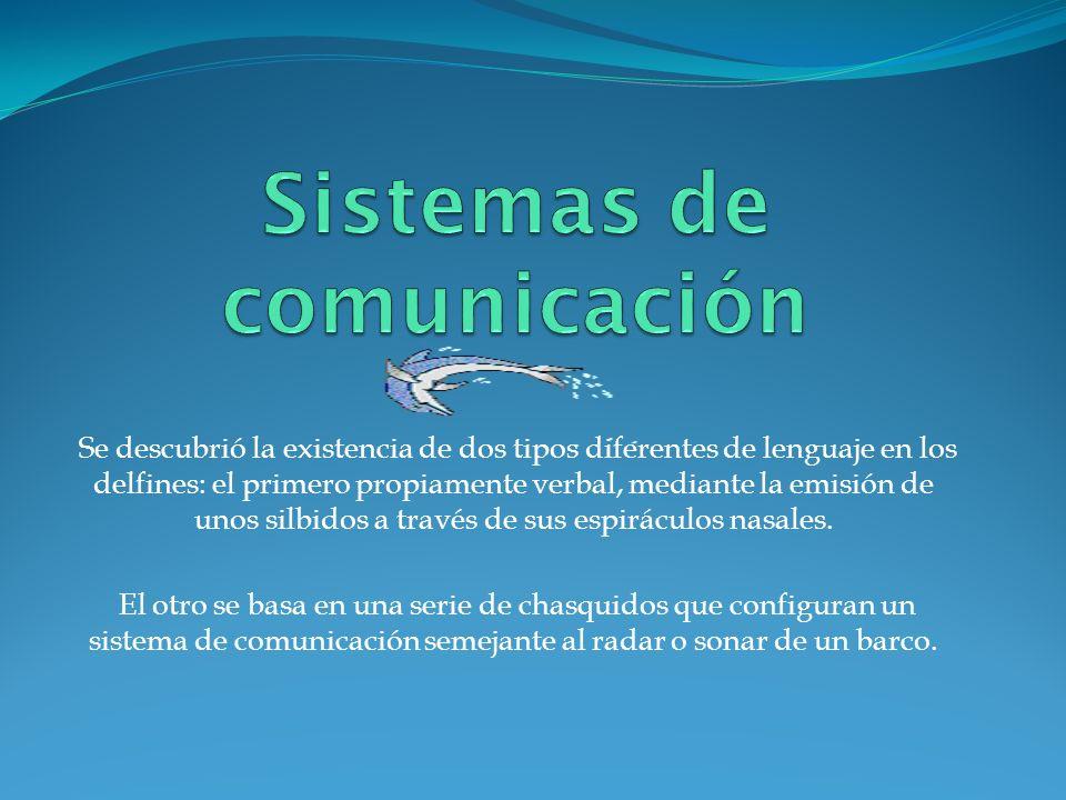 Se descubrió la existencia de dos tipos diferentes de lenguaje en los delfines: el primero propiamente verbal, mediante la emisión de unos silbidos a