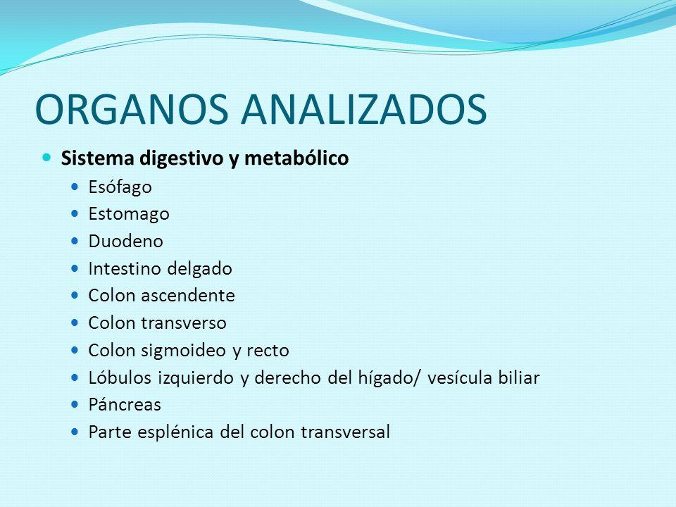 ORGANOS ANALIZADOS Sistema digestivo y metabólico Esófago Estomago Duodeno Intestino delgado Colon ascendente Colon transverso Colon sigmoideo y recto