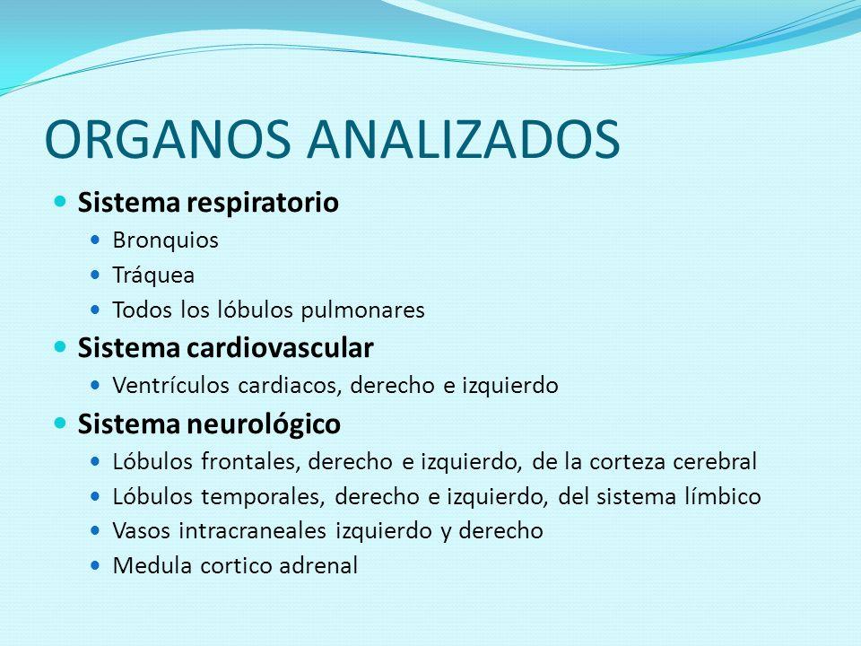 ORGANOS ANALIZADOS Sistema respiratorio Bronquios Tráquea Todos los lóbulos pulmonares Sistema cardiovascular Ventrículos cardiacos, derecho e izquier