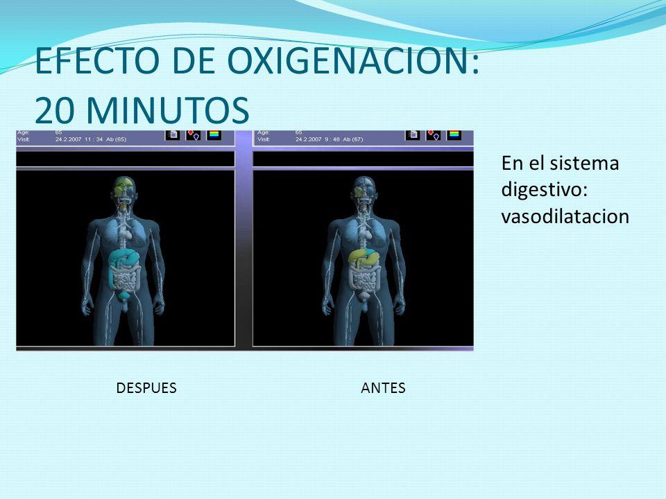 EFECTO DE OXIGENACION: 20 MINUTOS DESPUESANTES En el sistema digestivo: vasodilatacion