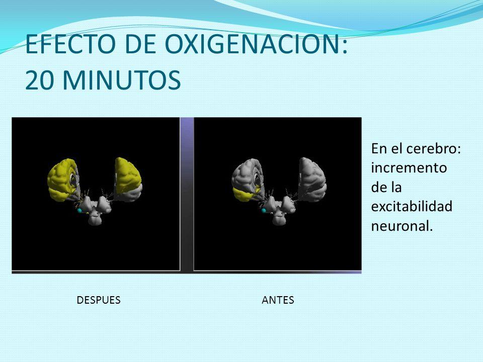 EFECTO DE OXIGENACION: 20 MINUTOS ANTESDESPUES En el cerebro: incremento de la excitabilidad neuronal.