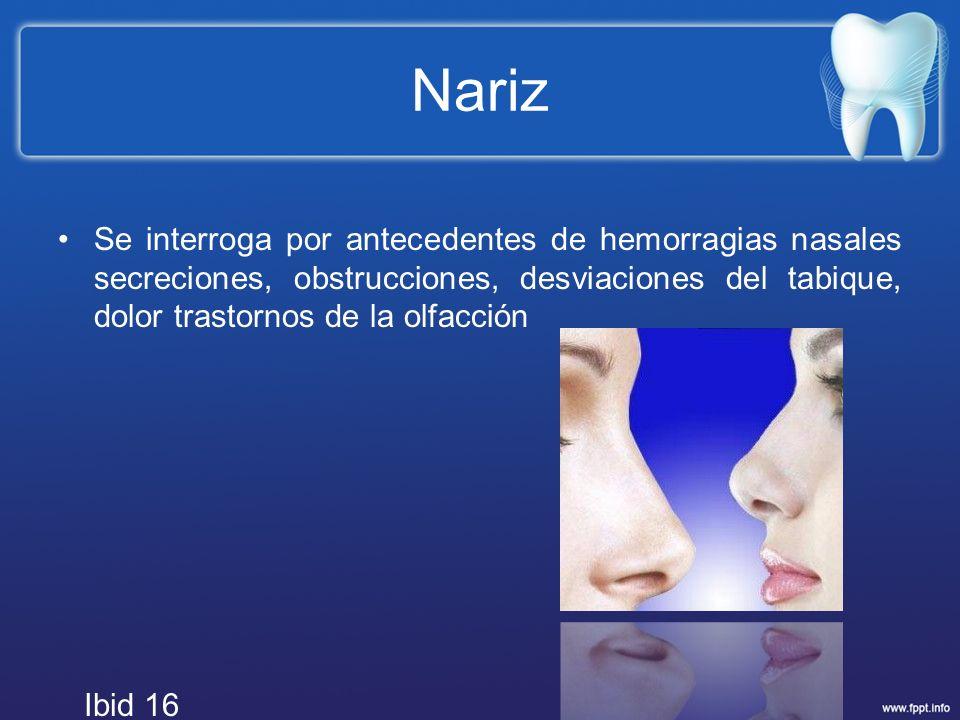 Nariz Se interroga por antecedentes de hemorragias nasales secreciones, obstrucciones, desviaciones del tabique, dolor trastornos de la olfacción Ibid