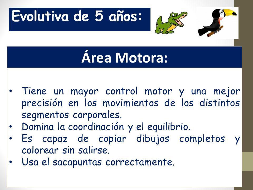 Evolutiva de 5 años: Área Motora: Tiene un mayor control motor y una mejor precisión en los movimientos de los distintos segmentos corporales.