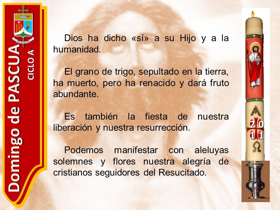 20 11 Domingo de PASCUA CICLO A Dios ha dicho «sí» a su Hijo y a la humanidad. El grano de trigo, sepultado en la tierra, ha muerto, pero ha renacido