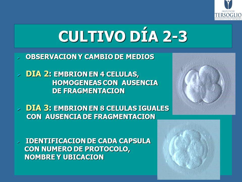 CULTIVO DÍA 2-3 OBSERVACION Y CAMBIO DE MEDIOS OBSERVACION Y CAMBIO DE MEDIOS DIA 2: EMBRION EN 4 CELULAS, DIA 2: EMBRION EN 4 CELULAS, HOMOGENEAS CON
