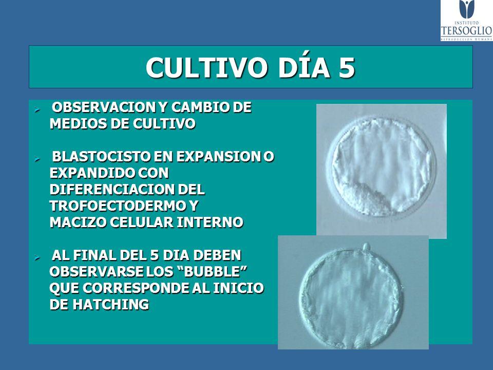 CULTIVO DÍA 5 OBSERVACION Y CAMBIO DE OBSERVACION Y CAMBIO DE MEDIOS DE CULTIVO MEDIOS DE CULTIVO BLASTOCISTO EN EXPANSION O BLASTOCISTO EN EXPANSION