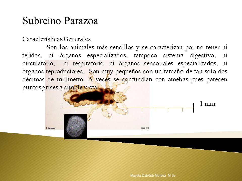 Subreino Parazoa Características Generales. Son los animales más sencillos y se caracterizan por no tener ni tejidos, ni órganos especializados, tampo