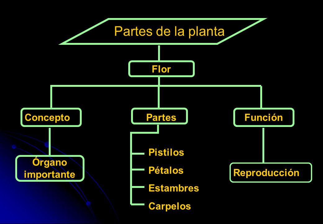 Partes de la planta ConceptoPartesFunción Órgano importante Pistilos Pétalos Estambres Carpelos Flor Reproducción