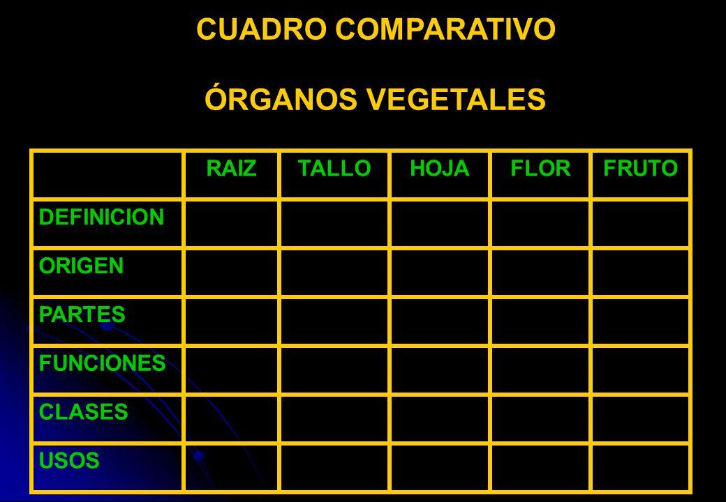 CUADRO COMPARATIVO ÓRGANOS VEGETALES USOS CLASES FUNCIONES PARTES ORIGEN DEFINICION FRUTOFLORHOJATALLORAIZ