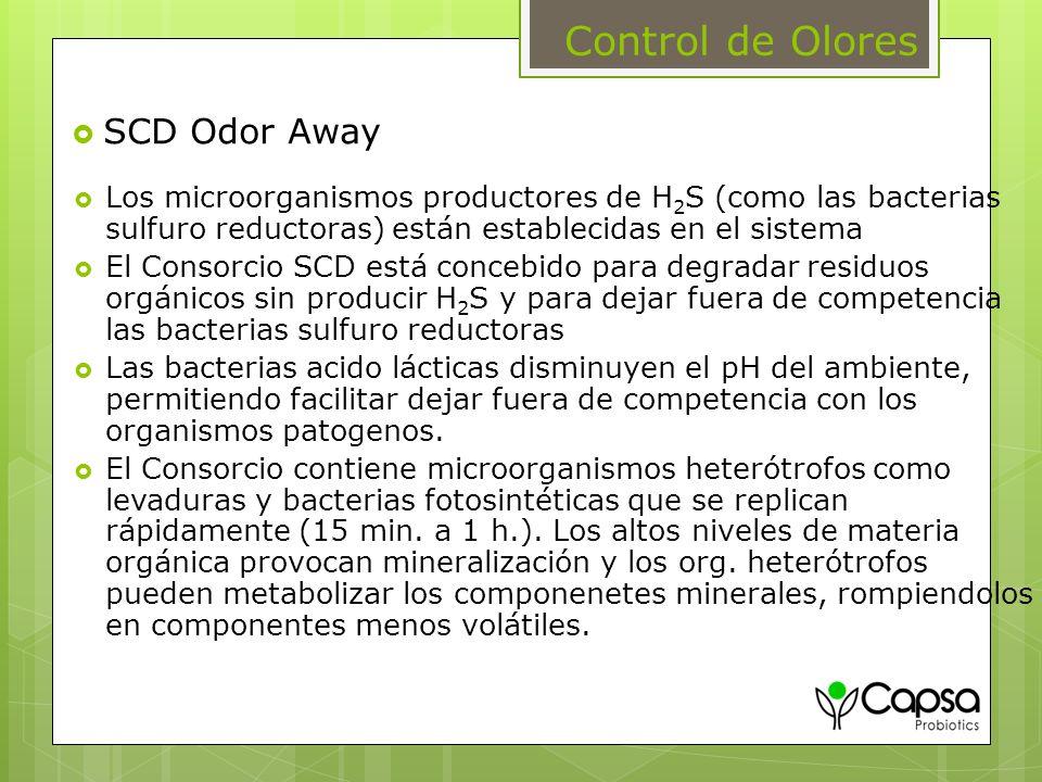 Control de Olores Los microorganismos productores de H 2 S (como las bacterias sulfuro reductoras) están establecidas en el sistema El Consorcio SCD e