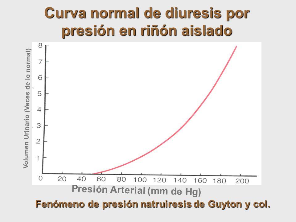 Presión Arterial (mm de Hg) Volumen Urinario (Veces de lo normal) Curva normal de diuresis por presión en riñón aislado Fenómeno de presión natruiresi