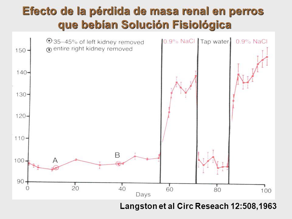 Efecto de la pérdida de masa renal en perros que bebían Solución Fisiológica Langston et al Circ Reseach 12:508,1963