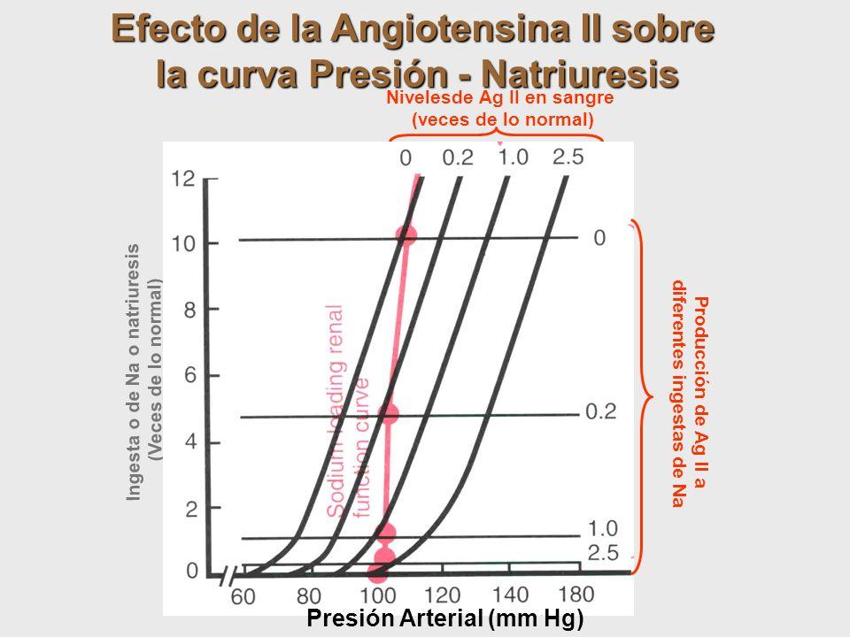 Ingesta o de Na o natriuresis (Veces de lo normal) Efecto de la Angiotensina II sobre la curva Presión - Natriuresis Nivelesde Ag II en sangre (veces