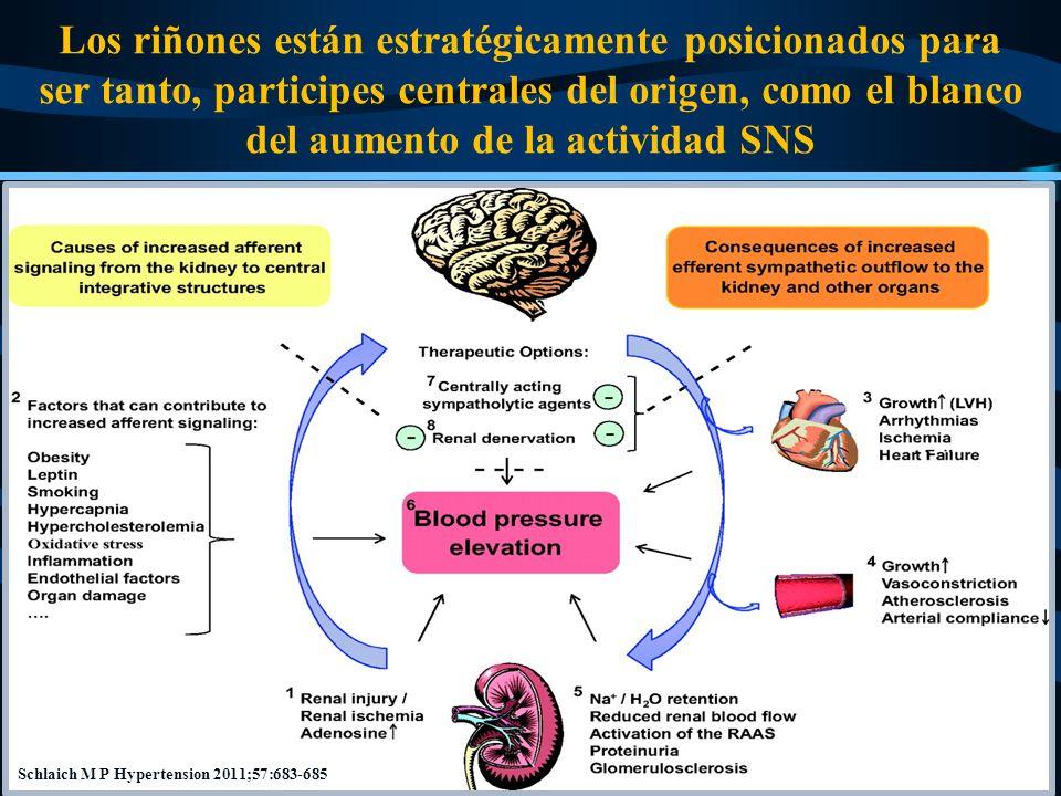 Los riñones están estratégicamente posicionados para ser tanto, participes centrales del origen, como el blanco del aumento de la actividad SNS Schlai