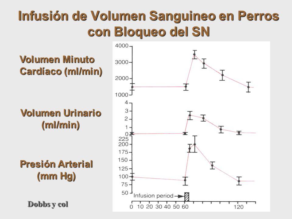Volumen Minuto Cardíaco (ml/min) Volumen Urinario (ml/min) Presión Arterial (mm Hg) Infusión de Volumen Sanguineo en Perros con Bloqueo del SN Dobbs y
