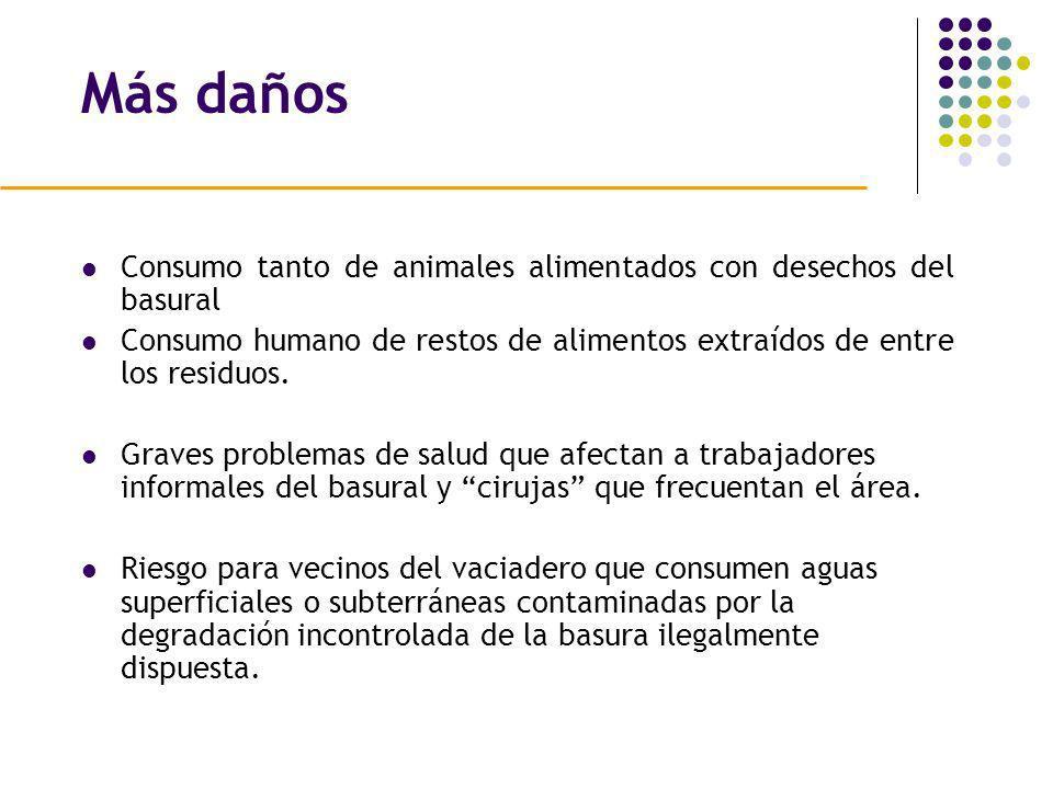 Más daños Consumo tanto de animales alimentados con desechos del basural Consumo humano de restos de alimentos extraídos de entre los residuos. Graves