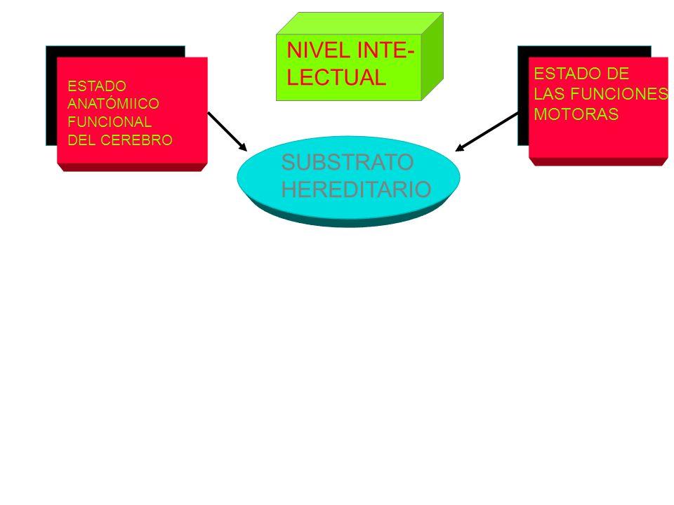 ESTADO ANATÓMIICO FUNCIONAL DEL CEREBRO SUBSTRATO HEREDITARIO ESTADO DE LAS FUNCIONES MOTORAS NIVEL INTE- LECTUAL