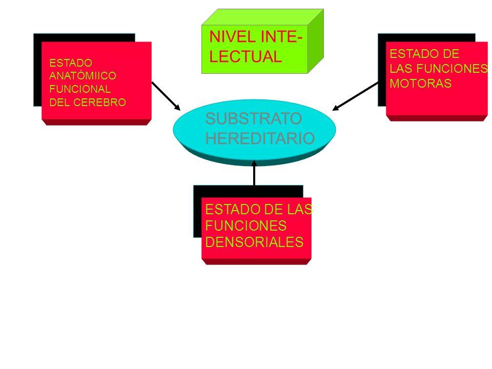 ESTADO ANATÓMIICO FUNCIONAL DEL CEREBRO SUBSTRATO HEREDITARIO ESTADO DE LAS FUNCIONES DENSORIALES ESTADO DE LAS FUNCIONES MOTORAS NIVEL INTE- LECTUAL