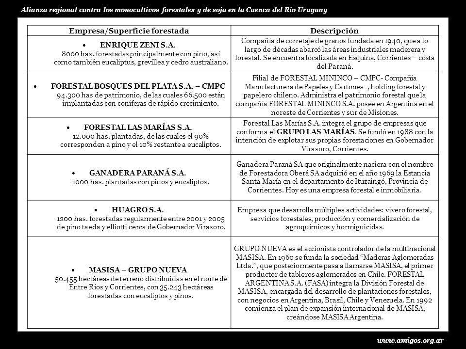 www.amigos.org.ar Alianza regional contra los monocultivos forestales y de soja en la Cuenca del Río Uruguay ENRIQUE ZENI S.A. 8000 has. forestadas pr