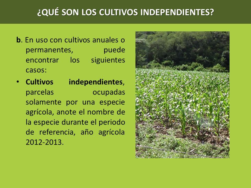 ¿QUÉ SON LOS CULTIVOS INDEPENDIENTES? b. En uso con cultivos anuales o permanentes, puede encontrar los siguientes casos: Cultivos independientes, par