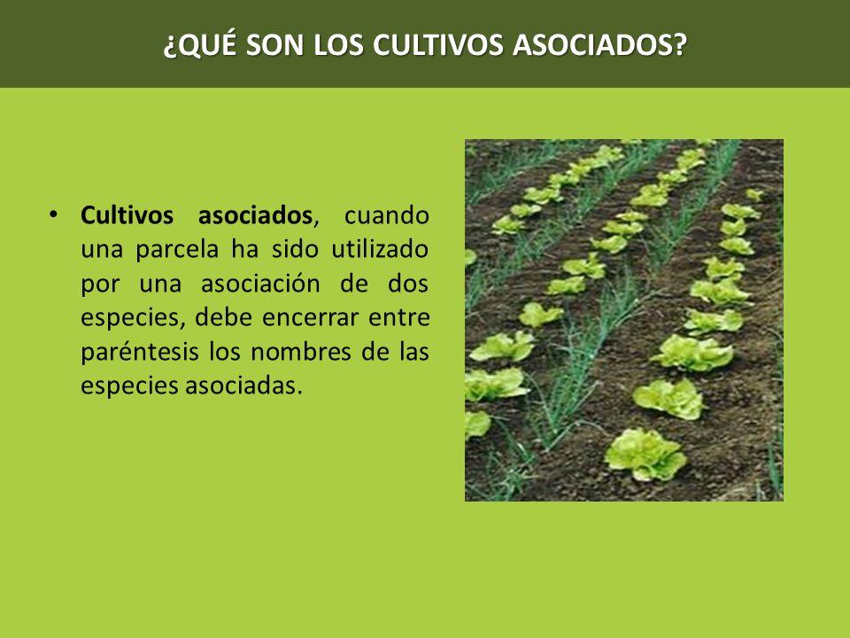 ¿QUÉ SON LOS CULTIVOS ASOCIADOS? Cultivos asociados, cuando una parcela ha sido utilizado por una asociación de dos especies, debe encerrar entre paré