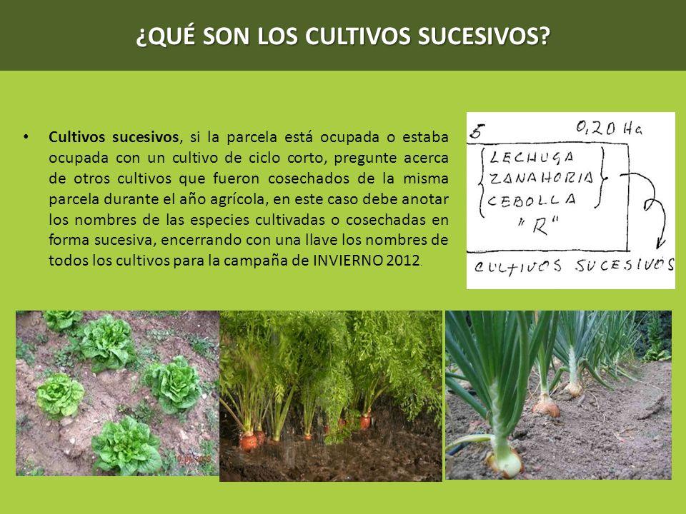 ¿QUÉ SON LOS CULTIVOS SUCESIVOS? Cultivos sucesivos, si la parcela está ocupada o estaba ocupada con un cultivo de ciclo corto, pregunte acerca de otr