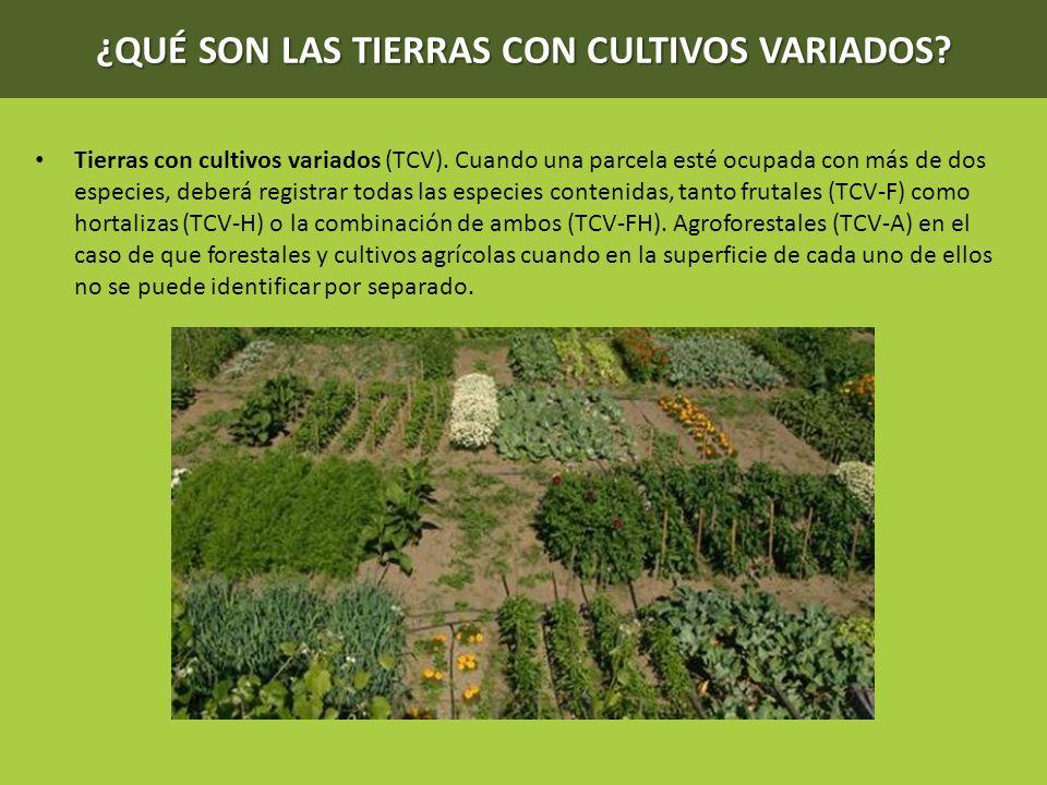 ¿QUÉ SON LAS TIERRAS CON CULTIVOS VARIADOS? Tierras con cultivos variados (TCV). Cuando una parcela esté ocupada con más de dos especies, deberá regis