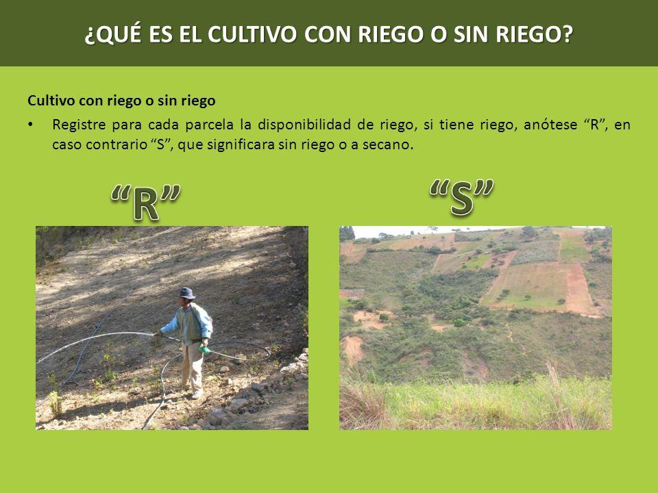 ¿QUÉ ES EL CULTIVO CON RIEGO O SIN RIEGO? Cultivo con riego o sin riego Registre para cada parcela la disponibilidad de riego, si tiene riego, anótese