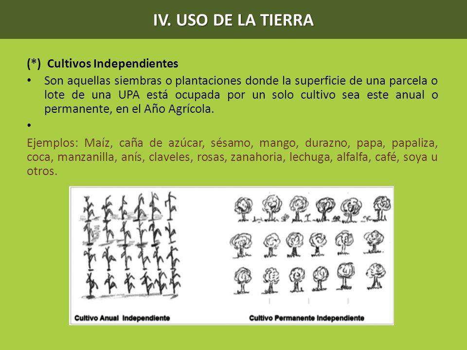 (*) Cultivos Independientes Son aquellas siembras o plantaciones donde la superficie de una parcela o lote de una UPA está ocupada por un solo cultivo