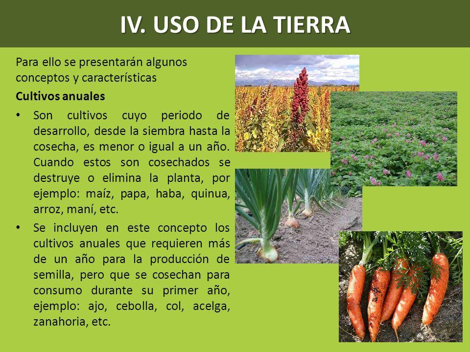 IV. USO DE LA TIERRA Para ello se presentarán algunos conceptos y características Cultivos anuales Son cultivos cuyo periodo de desarrollo, desde la s