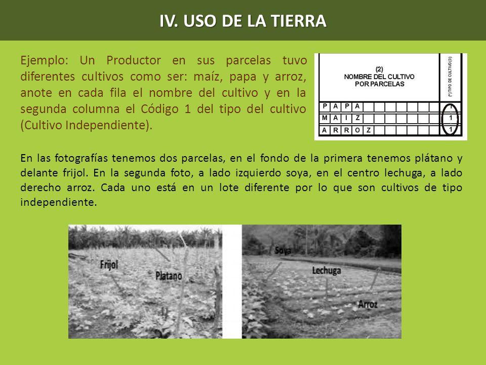 Ejemplo: Un Productor en sus parcelas tuvo diferentes cultivos como ser: maíz, papa y arroz, anote en cada fila el nombre del cultivo y en la segunda