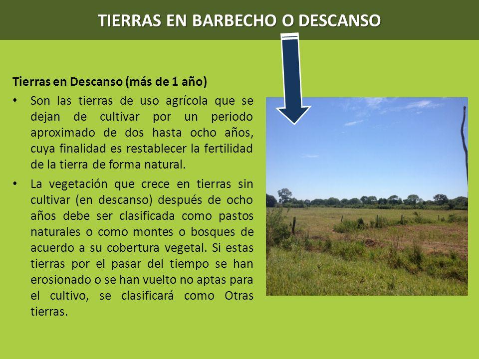 TIERRAS EN BARBECHO O DESCANSO Tierras en Descanso (más de 1 año) Son las tierras de uso agrícola que se dejan de cultivar por un periodo aproximado d