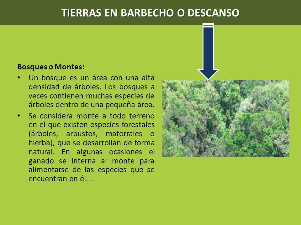TIERRAS EN BARBECHO O DESCANSO Bosques o Montes: Un bosque es un área con una alta densidad de árboles. Los bosques a veces contienen muchas especies