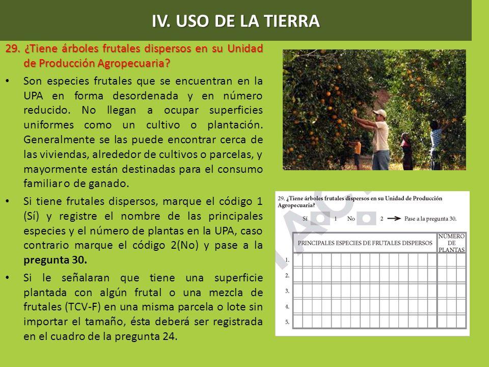 IV. USO DE LA TIERRA 29. ¿Tiene árboles frutales dispersos en su Unidad de Producción Agropecuaria? Son especies frutales que se encuentran en la UPA