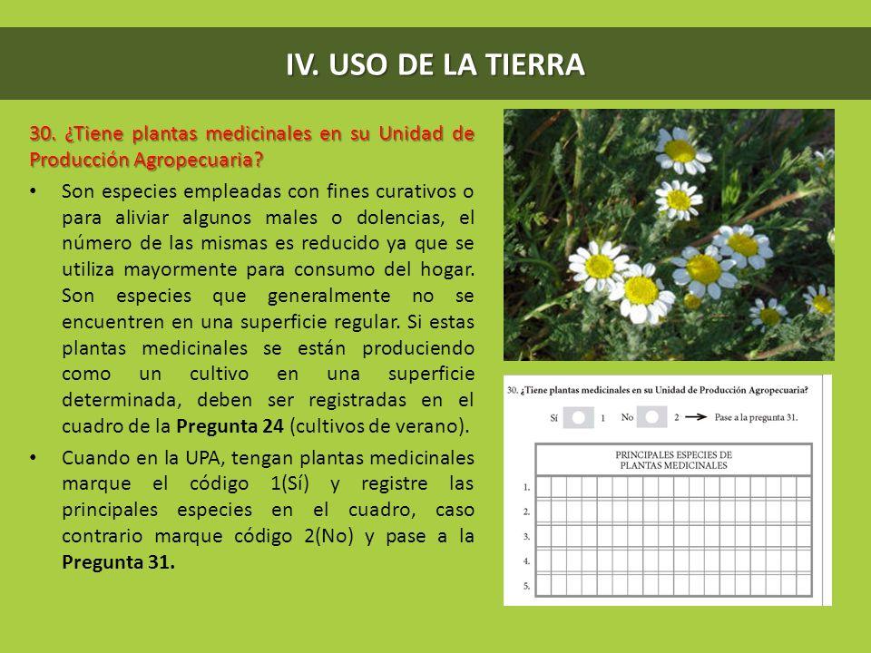 IV. USO DE LA TIERRA 30. ¿Tiene plantas medicinales en su Unidad de Producción Agropecuaria? Son especies empleadas con fines curativos o para aliviar