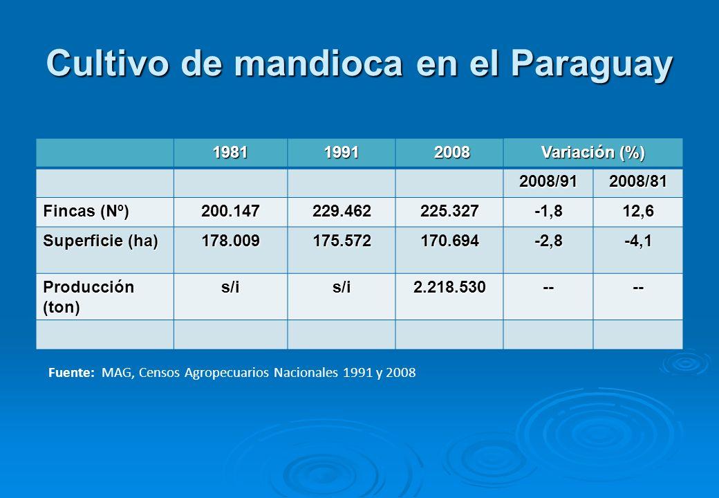 Cultivo de mandioca en el Paraguay 19811991 2008 2008 Variación (%) 2008/912008/81 Fincas (Nº) 200.147229.462225.327-1,812,6 Superficie (ha) 178.009175.572170.694-2,8-4,1 Producción (ton) s/is/i2.218.530---- Fuente: MAG, Censos Agropecuarios Nacionales 1991 y 2008