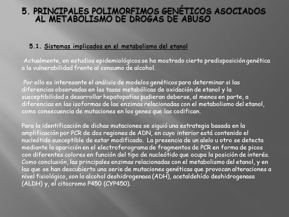5. PRINCIPALES POLIMORFIMOS GENÉTICOS ASOCIADOS AL METABOLISMO DE DROGAS DE ABUSO 5.1. Sistemas implicados en el metabolismo del etanol Actualmente, e