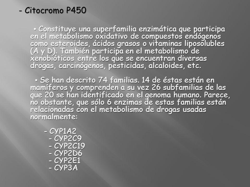 - Citocromo P450 Constituye una superfamilia enzimática que participa en el metabolismo oxidativo de compuestos endógenos como esteroides, ácidos gras