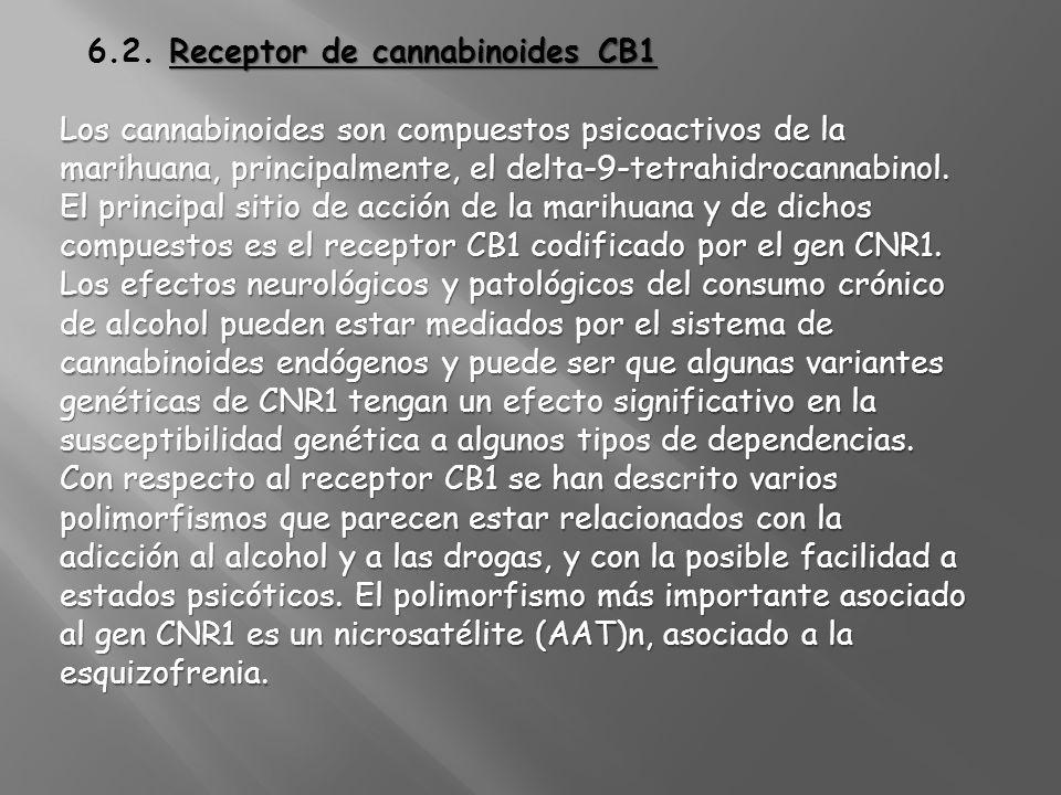 Receptor de cannabinoides CB1 6.2. Receptor de cannabinoides CB1 Los cannabinoides son compuestos psicoactivos de la marihuana, principalmente, el del