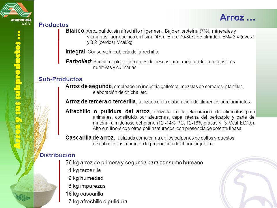 AGRONOMÍA U.C.V. Arroz y sus subproductos … Blanco: Arroz pulido, sin afrechillo ni germen. Bajo en proteína (7%), minerales y vitaminas; aunque rico