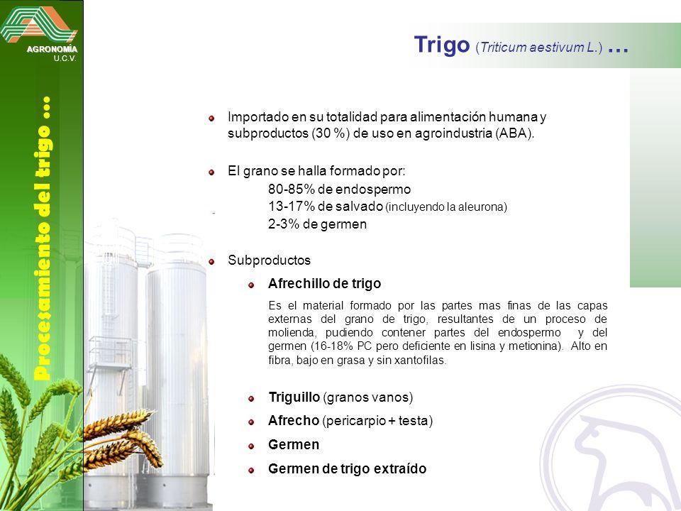 AGRONOMÍA U.C.V. Procesamiento del trigo … Trigo (Triticum aestivum L.) … Importado en su totalidad para alimentación humana y subproductos (30 %) de