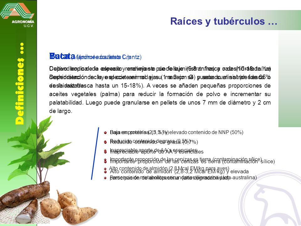 AGRONOMÍA U.C.V. Definiciones … Raíces y tubérculos … Yuca (Manihot esculenta Crantz) Dependiendo de la especie y manejo se puede suministrar fresca o